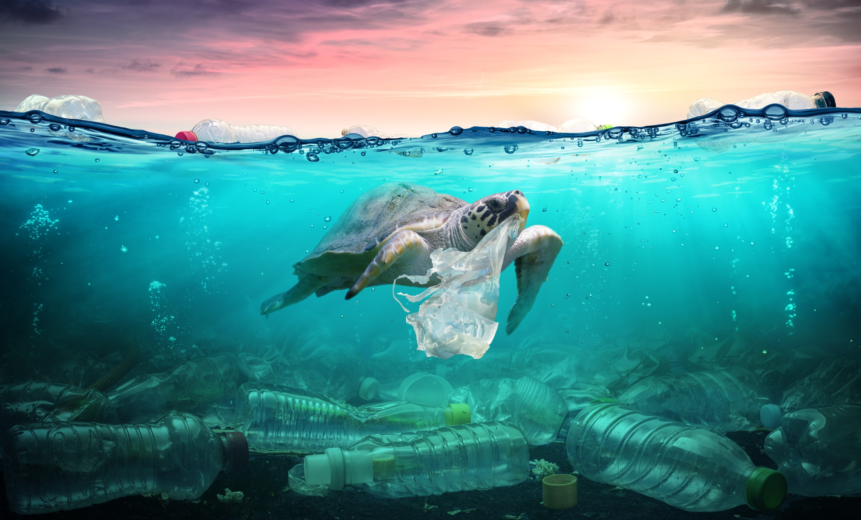 Sea-Turtle-With-Pollution