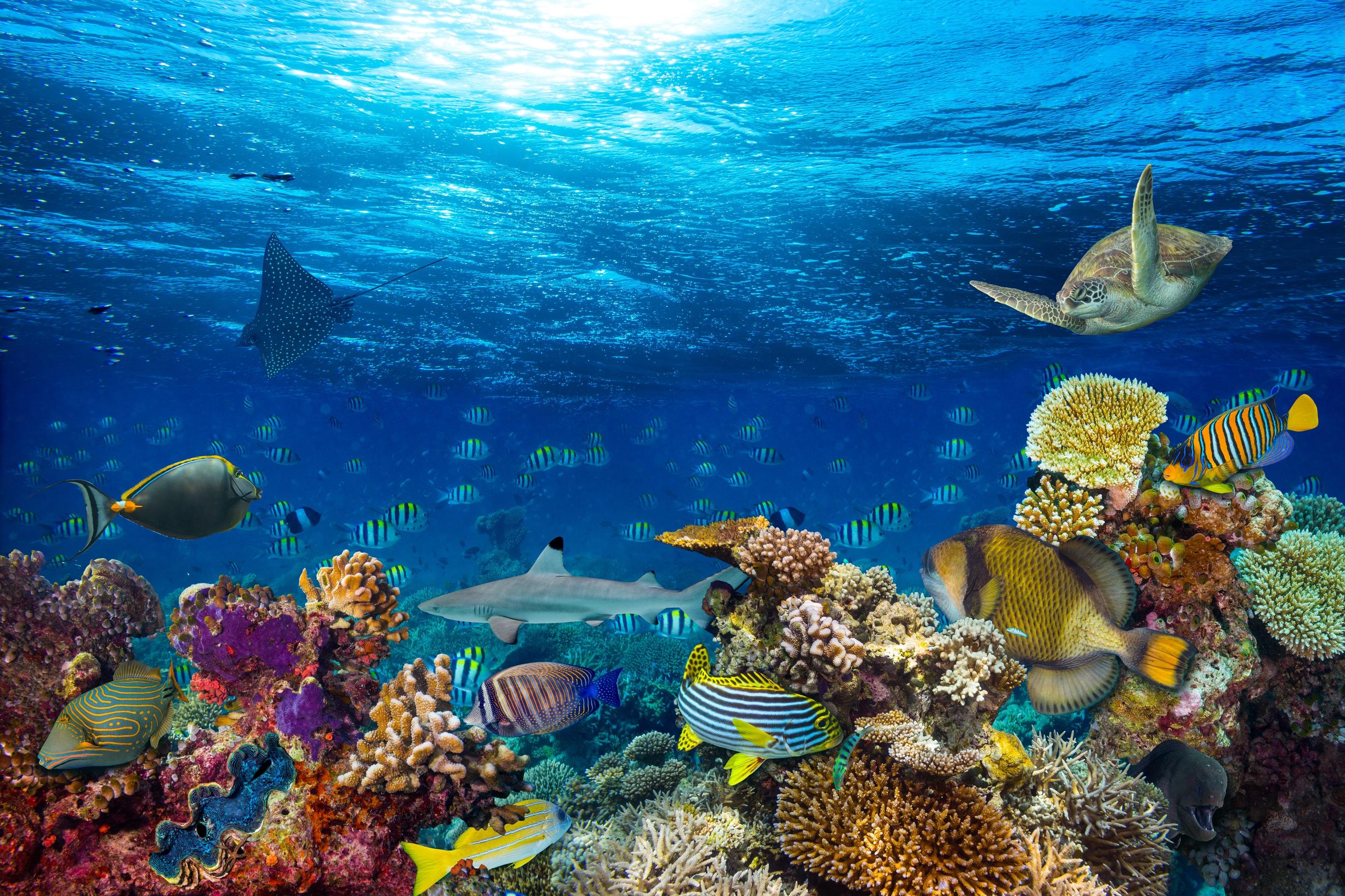 Underwater-Coral-Reef-Paradise-1